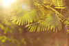 153 | 365 (Franco Rostan | Fotografía) Tags: new light summer sky orange naturaleza sun color macro reflection verde green art love primavera luz nature argentina colors yellow photography 50mm gold luces photo google nikon flickr day foto dof photos bokeh top live colores explore amarillo reflejo contraste perspectiva jpg 365 proyect geo día day18 naranja nueva fotógrafo franco 2012 brillo fotografía cámara pring encuadre day365 enfoque nitidez week08 feb18 f14g rostan i365 proyect365 proyecto365 d3100 nikond3100 francorostan load365 proyect153