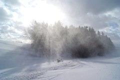 glaring (michael pollak) Tags: schnee winter snow fun snowstorm kalt waldviertel schneesturm sturm sauwetter hintaus rafings