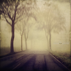 set out (silviaON) Tags: road street trees mist fog february ie textured 2012 bsactions oracope dyrkwysttexture alledgesactions top2012 ftsfeb