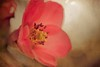 Spring (Rhonda in TN) Tags: pink gay anna flower texture lensbaby retro leavitt annagay sweet35 composerpro