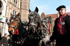 DSC_3586 (Ton van der Weerden) Tags: horses horse dutch de cheval venlo nederlands belges draft chevaux belgisch trait boerenbruiloft trekpaard boerebroelof trekpaarden boerenbruiloftvenlocarnaval2012