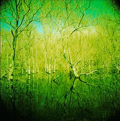 boring shit. (David Adam Salinas) Tags: trees reflection 120 film water analog zeiss xpro crossprocessed filter filters treeline fujivelvia50 hasselblad500cm homeprocessed davidsalinas filterstack 50mmf4distagon