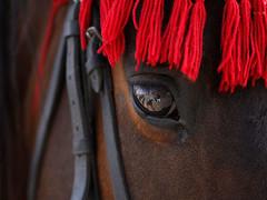 Στολισμένο με κόκκινα χρώματα το άλογο στο Νεπάλ συμμετέχει στο φεστιβάλ του Ghode Jatra. Το φεστιβάλ γίνεται κάθε χρόνο στο Κατμαντού για να γιορτάσουν την νίκη τους εναντίων του δαίμονα Tundi. Συμφωνα με τον μύθο ο θόρυβος από τις οπλές των αλόγων κρατά