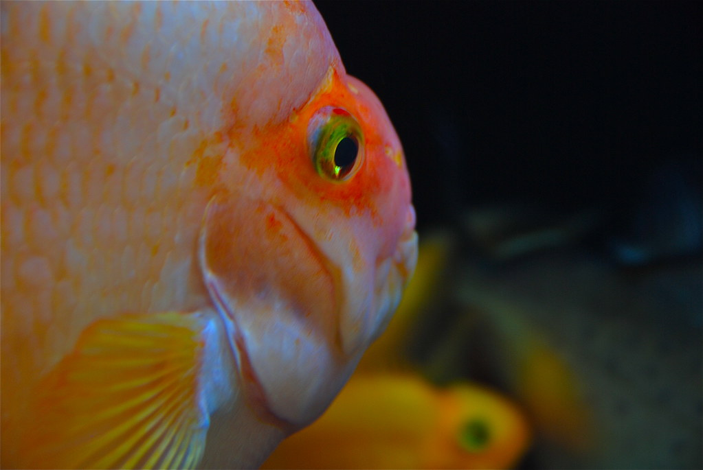 Best Food For Yellow Parrot Fish