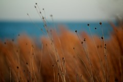 The City or the Sea? (Philocycler) Tags: chicago grass bokeh horizon lakemichigan bluesea chicagoist hss chicagolakefront northerlyisland thecityorthesea