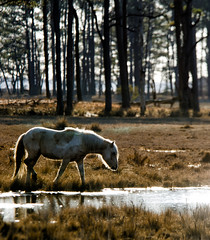 Sunlit Pony - Explored (Michael Kline) Tags: march va 2012 chincoteague