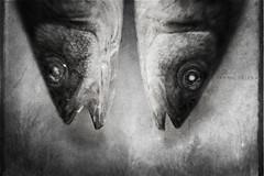 time loss (Irina Boldina) Tags: bw fish art texture lensbaby squared timeloss texturesquared