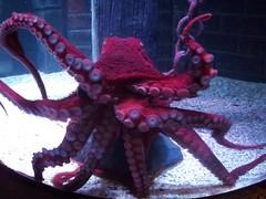 Jock the Giant Octopus (Calla Lily Gently Weeps) Tags: jock giant octopus lochlomond