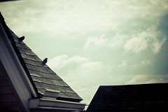 The day begins (hvregisphotography) Tags: life morning blue summer sun inspiration bird birds clouds rooftops shingles roofing vintagelook