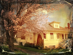 April in Fernwood (Nick Kenrick.) Tags: spring blossom april fernwood tistheseason motat tatot magicunicornverybest magicunicornmasterpiece