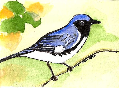 black throated  blue warbler - ACEO - Original Watercolor