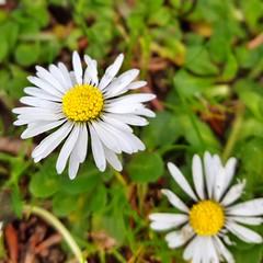 En la sencillez de las cosas est la esencia (Miamy7) Tags: flowers naturaleza flores macro momentos naturalezacautivadora macrounlimited