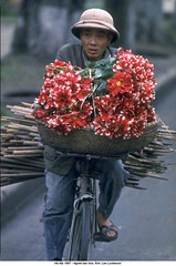 5571112 (ngao5) Tags: flowers people flower bicycle reeds basket transport vietnam used hauling hanoi load horticulture weaving seller dahlias customs timeincnotown 5571112