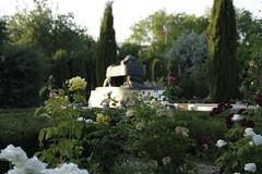 Blurry garden (anestesiainfinita) Tags: park roses sculpture flower canon garden eos blury 1000d