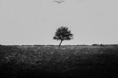 Alone (Explored Thank you all!) (Fredrik Lindedal) Tags: blackandwhite bw white black tree field grass skyline nikon depthoffield minimalism lindedal
