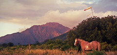 LA MONTAA MAGICA (Marina Balasini) Tags: light sunset red sky horse naturaleza mountains nature argentina rural landscape caballo rojo wind hiking air free viento explore montaa libre armonia explored