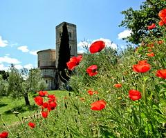 Sant'Antimo (RD_Elsie) Tags: tuscany poppies montalcino toscana valdorcia papaveri santantimo