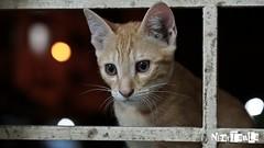 #cat #babycat #potrait #beautifulcat (13.La) Tags: cat potrait babycat beautifulcat