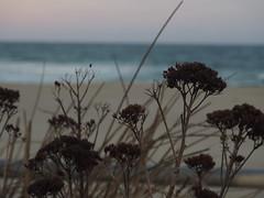 P3263732 (robotbrainz) Tags: ocean newjersey asburypark nj boardwalk atlanticocean bychristine olympusomdem10