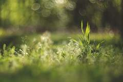 Morning magic (Tammy Schild) Tags: morning light green nature grass spring bokeh 402 helios
