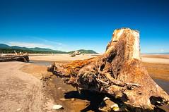 Where the Elwa River Meets the Strait of Juan De Fuca (figllano) Tags: elements driftwood ocean