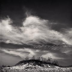 Wilderness Dune (Joe Iannandrea) Tags: sky blackandwhite cloud beach nature landscape outdoors michigan dune ishootfilm ilfordhp5 wildernessstatepark pmkpyro hasselblad503cx epsonv500 carlzeissdistagont50mmf4 photostock2016
