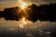 IMG_8898-1 (Andre56154) Tags: sunset sun lake water see wasser sonnenuntergang waterlily sweden schweden ufer sonne seerosen