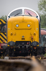 55007.Barrow Hill.13.6.16 (deltic17) Tags: diesel napier pinza deltic englishelectric barrowhill royalscotsgrey 55022 barrowhillroundhouse 55007 heritagediesel 0z55