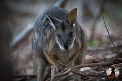 20160413-2ADU-019 Kangaroo Island