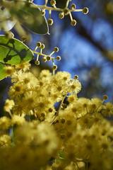Yellow (Stueyman) Tags: sony 24mm za zeiss alpha a6000 flower yellow