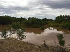 IMG_9391 (Mesa Arizona Basin 115/116) Tags: basin 115 116 basin115 basin116 mesa az arizona rc plane model flying fly guys flyguys