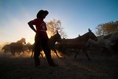 Vaqueiro do Pantanal / Pantanal cowboy (Samuel Betkowski) Tags: horse water água cavalo matogrosso pantanal pantaneiro pantanalcowboy vaqueirodopantanal