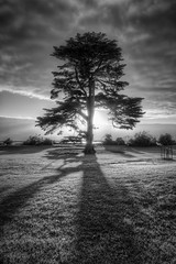 Catani tree (J-C-M) Tags: sunset shadow blackandwhite bw white black tree monochrome st high nikon dynamic australia melbourne victoria bayside backlit d200 range hdr highdynamicrange stkilda kilda backlighting shaded thepinnaclehof tphofweek206