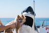 beach_023 (cindalynn) Tags: california family sun beach nature puppy landscape lunch sand scenery surfing brewery manhattanbeach pomeranian manhattanpier longboarding