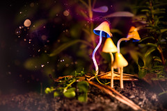"""""""In The Garden"""" (m_mkill) Tags: rain photoshop canon garden mushrooms drops backyard herbs bokeh dirty sparkle soil ii 5d curled tall f4 mkii in 24105 flashes gelled 430ex yn460"""
