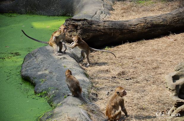木柵動物園11.jpg