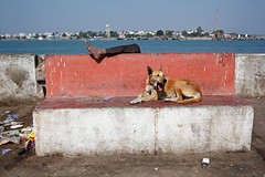 Bench - Diu, India (Maciej Dakowicz) Tags: sea people dog india bench person asia leg promenade phototrip diu