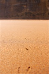 spuren im sand (loop_oh) Tags: ocean road cliff castle beach sand bass cove seagull gull great australia victoria cliffs australien greatoceanroad moewe mwe commonwealth strait rd downunder greatoceanrd klippen bight castlecove klippe bassstrait castlecovebeach