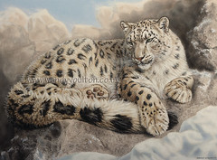 Snow Leopard by Wendy Youlton (Wendy Youlton) Tags: original portrait art animal painting artist cheshire pastel wildlife fineart bigcat snowleopard pastelpainting wildlifeart pastelportrait wildlifeartist snowleopardportrait snowleopardpainting wendyyoulton wendyyoultoncouk