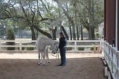 Mindy & Zorro (Barbara Alexander) Tags: horses boundaries selfimprovement selfawareness mentorship barbaraalexander equineexperientiallearning eponaridge
