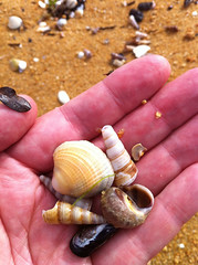 Handful of shells