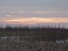 boompjes in de kou (ellyko2010) Tags: dag februari winterse