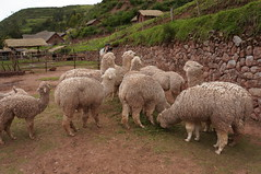 "Sacred Valley-Cusco • <a style=""font-size:0.8em;"" href=""http://www.flickr.com/photos/57634067@N04/6940225241/"" target=""_blank"">View on Flickr</a>"