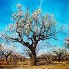 Yashica D Yashinon (santisss) Tags: primavera spring kodak ektachrome yashica yashicad yashinon 100g manualfocua