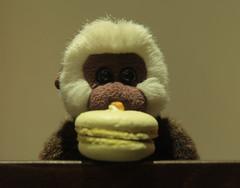 Ben's 10 (Girl Number 11) Tags: birthday food cake toy monkey ben macaroon pistachio ape benjamin gibbon