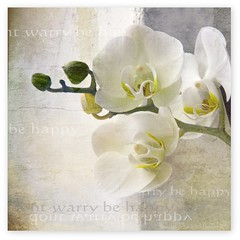 ...... be happy (Blende 007) Tags: white orchid flower orchidee blume weis abigfave