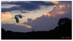 Frhjahrsbote....! (peterphot) Tags: photoshop himmel wolken montage strche