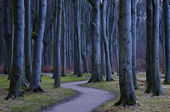 Spooky Forest (Dietrich Bojko Photographie) Tags: nature germany deutschland europe mecklenburgvorpommern gespensterwald dietrichbojko spookyforest