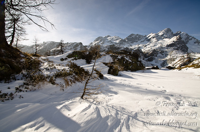 Essence sauvage (Vallone di Forzo, Valle Soana, Piemonte, Parco Nazionale del Gran Paradiso)
