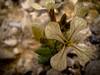 A tiny wild flower of around 1cm size..